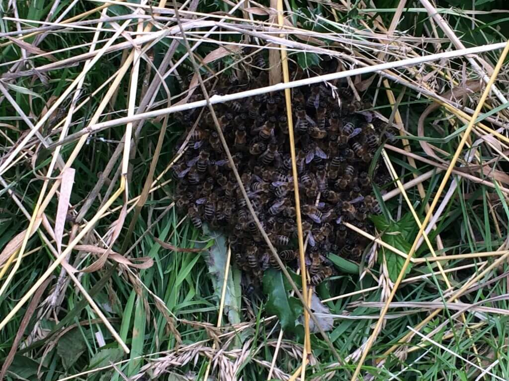 2016-07-07 002 Bijen Ekartweide