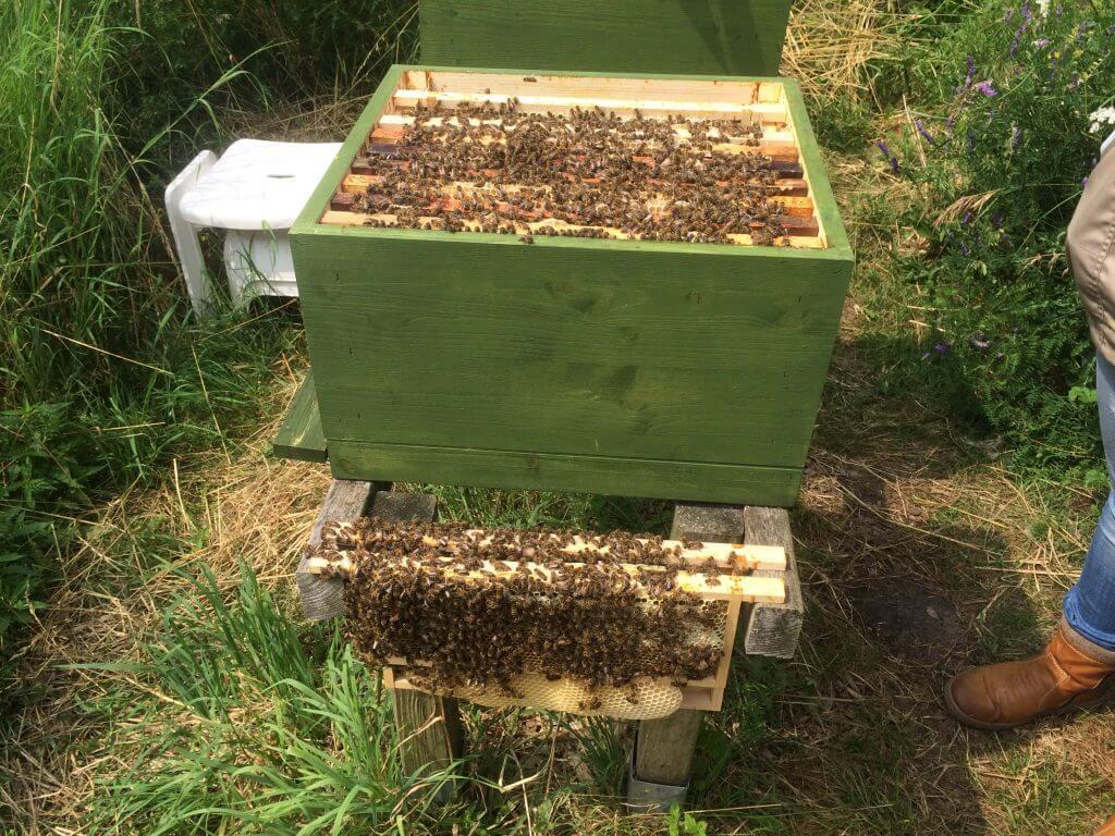 2016-07-24 003 Bijen Ekartweide