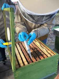 Oxaalzuur behandeling Beestenboel