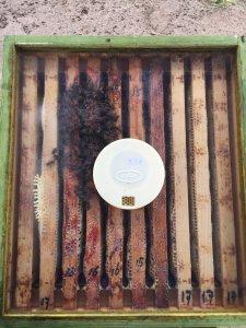 Beestenboel kast 1 plexiglas
